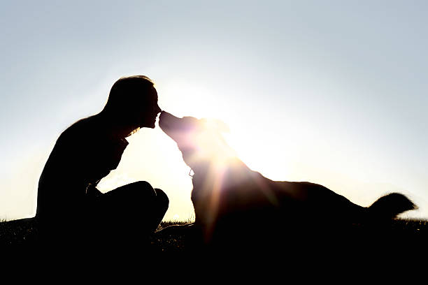 Happy Woman and Dog Outside Silhouette a silhouette of a happy young woman is sitting outside at sunset lovingly kissing her large German Shepherd mix breed dog. animal hand stock pictures, royalty-free photos & images