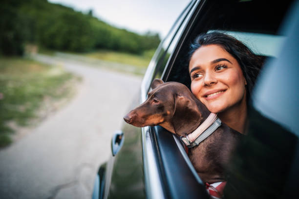 Happy woman and her dog driving in a car stock photo