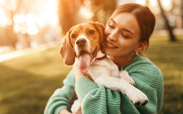 Happy woman embracing beagle dog in park stock photo