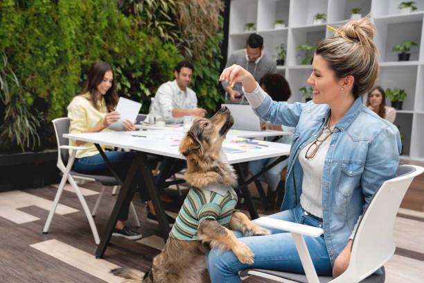 glückliche frau leckereien verleiht ein rettungshund - hunde aus dem tierheim stock-fotos und bilder
