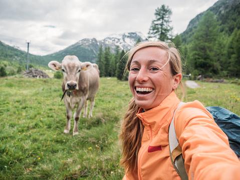 Selfie portrait of hiker female posing with cow on green grass meadow in alpine region