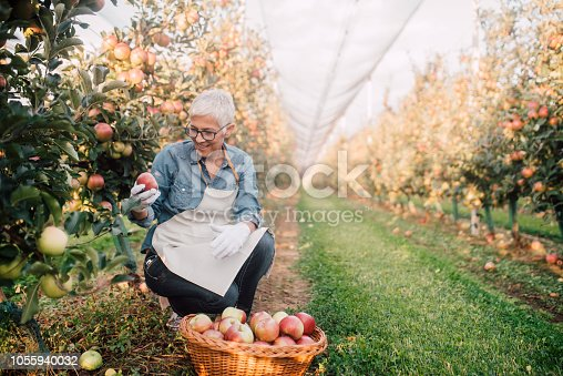 1056015258 istock photo Happy woman holding an apple 1055940032