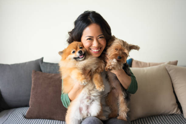 happy woman holding yorkie and spitz dogs on sofa - dog and owner stock photos and pictures