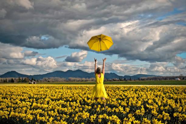 Happy woman in daffodil field with yellow umbrella stock photo
