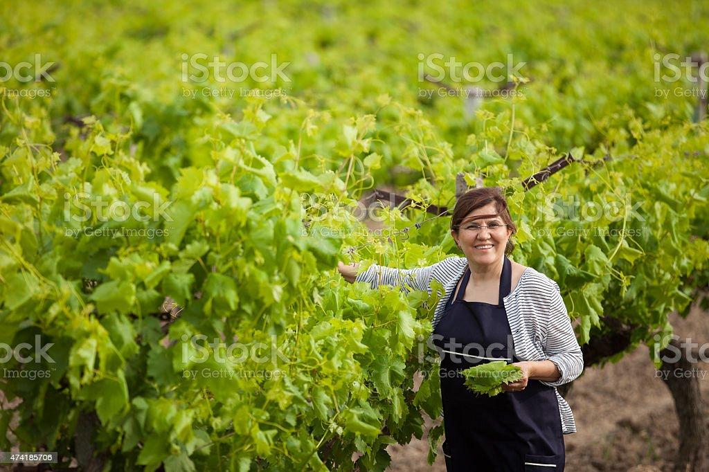 Femme heureuse dans les vignobles - Photo