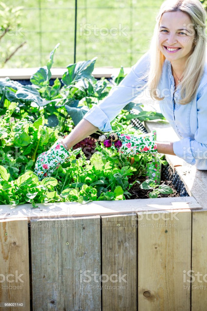 Happy woman is proud of her own raised bed stock photo