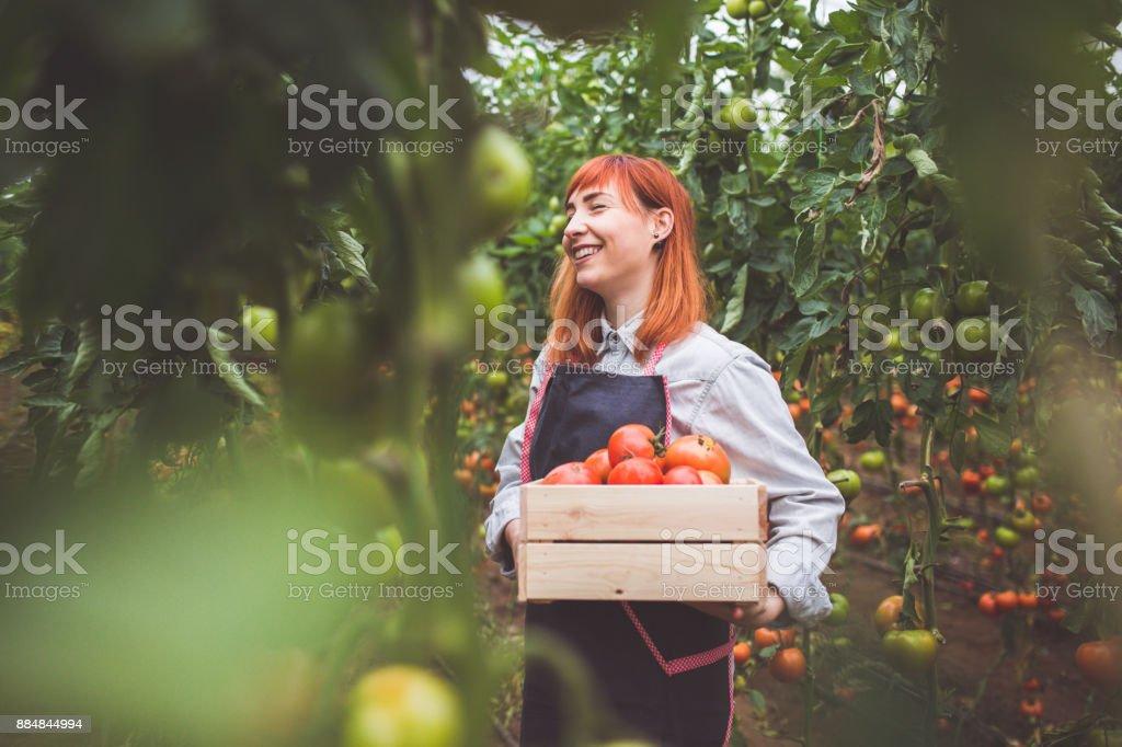 Glückliche Frau Kommissionierung reife Tomaten – Foto