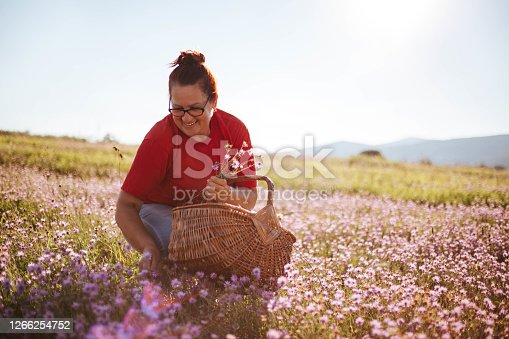A happy woman picks wildflowers