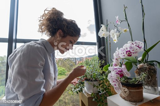Happy Latin American woman taking care of her home garden and looking at her bonsai – lifestyle concepts