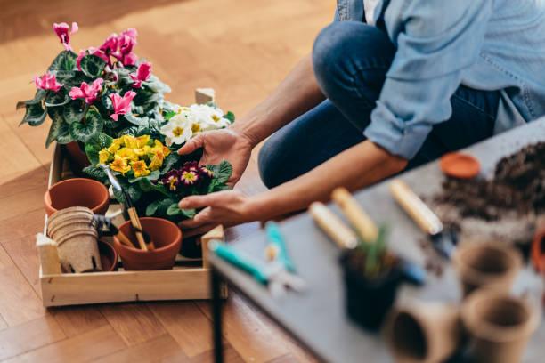 Glückliche Frau, die Frühlingsblumen aus Holzkiste. – Foto