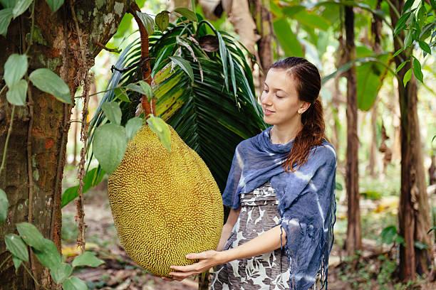 Happy woman tourist on fruit plantation stock photo
