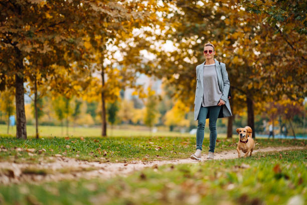 Happy woman walking on a park trail with a small brown dog in autumn stock photo