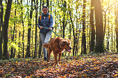 Hiking with retriever in autumn forest. Female pet owner walking with large dog in nature