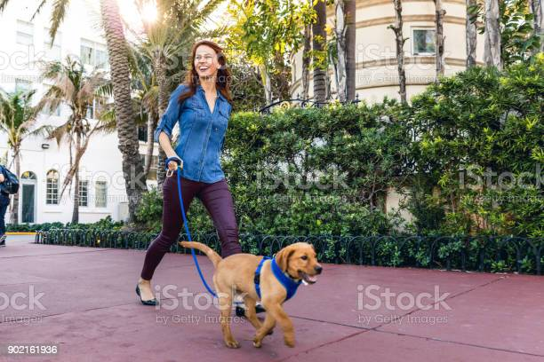 Happy woman walking with his labrador puppy in miami beach picture id902161936?b=1&k=6&m=902161936&s=612x612&h=it9lsl95osifacoyvprhlqcttcolzs3k5adjv1e1hxm=