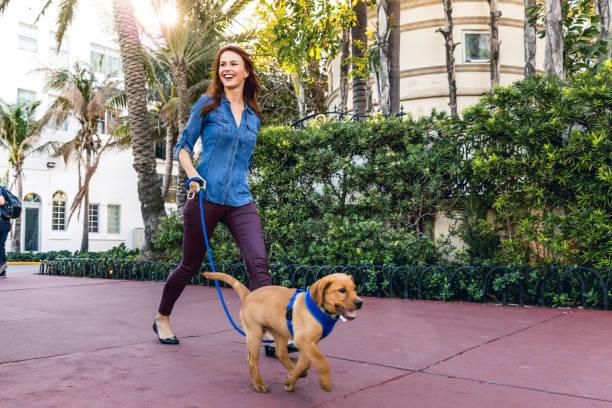 Happy woman walking with his labrador puppy in miami beach picture id902161936?b=1&k=6&m=902161936&s=612x612&w=0&h=3qyriwapbyj9jhmuk8qt1qd5vojbcgfwl3ybh47v8ic=