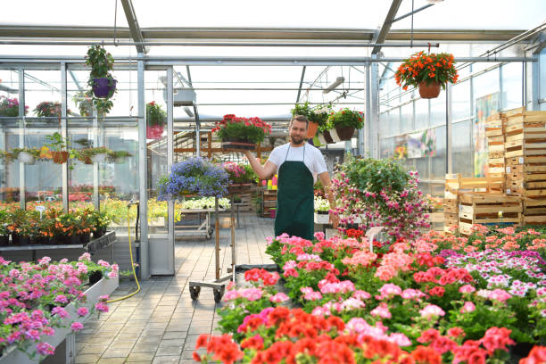 happy worker growing flowers in a greenhouse of a flower shop stock photo