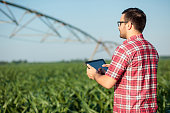 Happy young farmer or agronomist in red checkered shirt controlling large irrigation system with a tablet, standing in corn field. Organic farming and healthy food production.