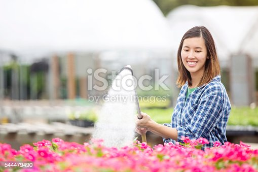 Beautiful young Vietnamese woman waters flowers with a spray hose while working in garden center or plant nursery. She is wearing a blue plaid shirt and has dark brown hair.