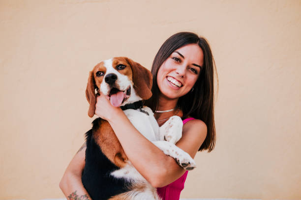 happy young woman outdoors having fun with beagle dog. Family and lifestyle concept. yellow background stock photo