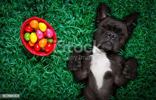 istock hapy easter dog with eggs 922965304