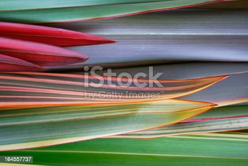 A background of a mixture of New Zealand Flax (Harakeke) plant leaves.