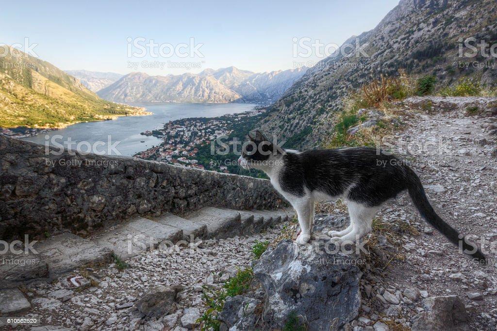 Harbor Cat Overlooking the Bay of Kotor stock photo