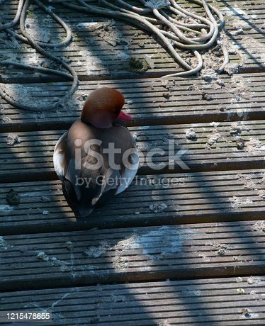 duck or bird feces on wooden pier