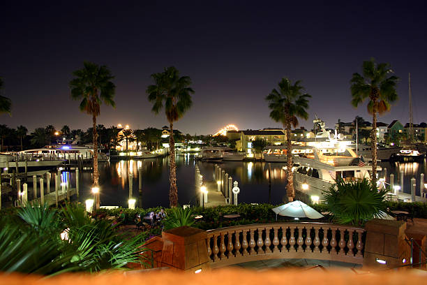 Harbor view through palm trees at night stock photo