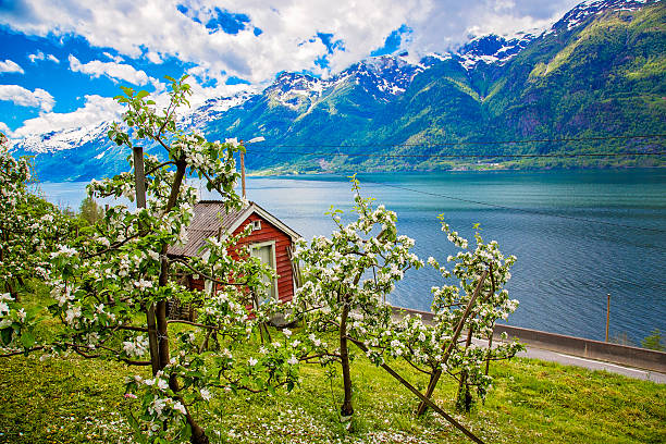 Hardanger fjord im Mai, Norwegen – Foto