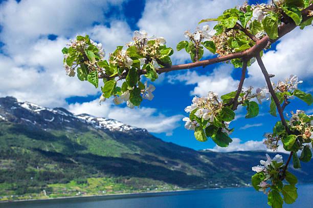 Hardangerfjord im Mai, Norwegen – Foto