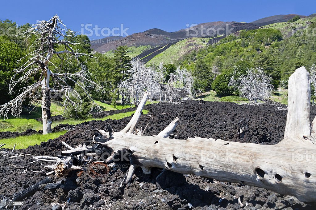 hardened lava flow on green slope of Etna, Sicily royalty-free stock photo