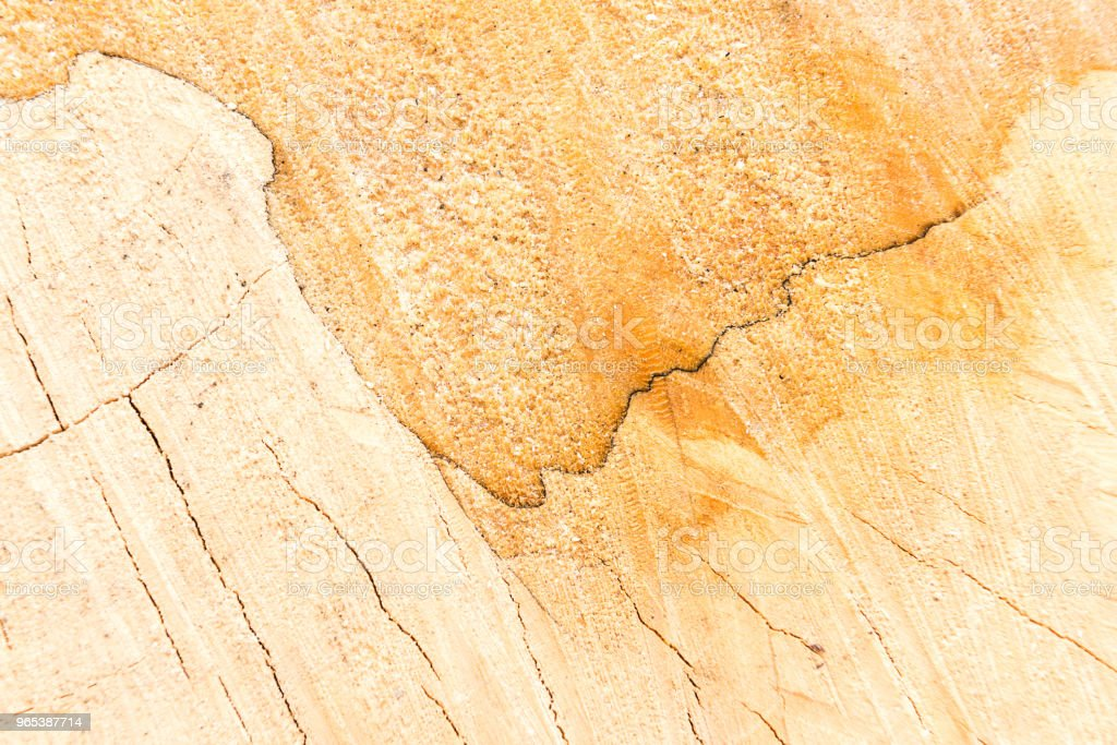 Hardwood and carpentry concept with sawed wood surface royalty-free stock photo