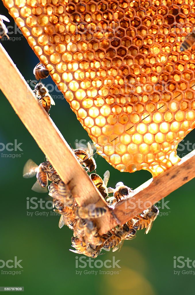hardworking bees on honeycomb in apiary stock photo