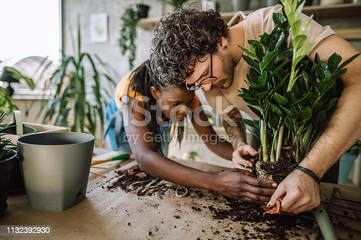 Hardworking Multi ethnic Couple Planting In Their Flower Shop, Seedling New Plants Putting Them in Flower Pot