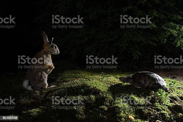 Hare and tortoise picture id80488448?b=1&k=6&m=80488448&s=612x612&h=d907hl53qeqq25yheyb vjzap5cmuuozdnv1fhymzn4=