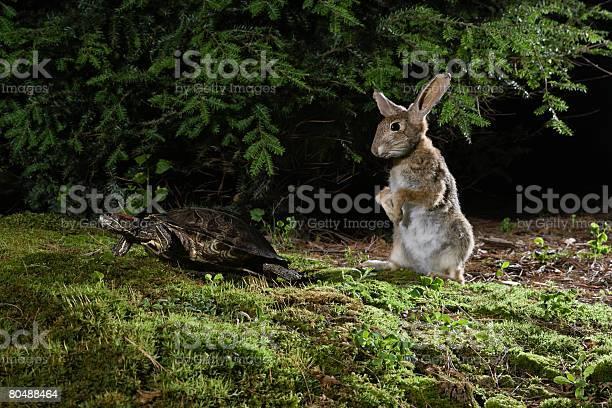 Hare and tortoise picture id80488464?b=1&k=6&m=80488464&s=612x612&h=5rdv pyxeyk  ja9sgh3v6duv8e8kjd0tnnxscb fi4=