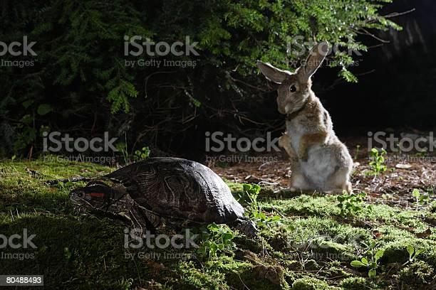 Hare and tortoise picture id80488493?b=1&k=6&m=80488493&s=612x612&h=6i9a89 eztoevi zxqgkawo5x yy yfnxsmtzj432 y=