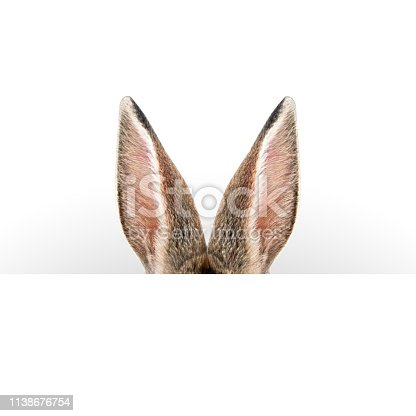 istock Hare ears. Easter card. 1138676754
