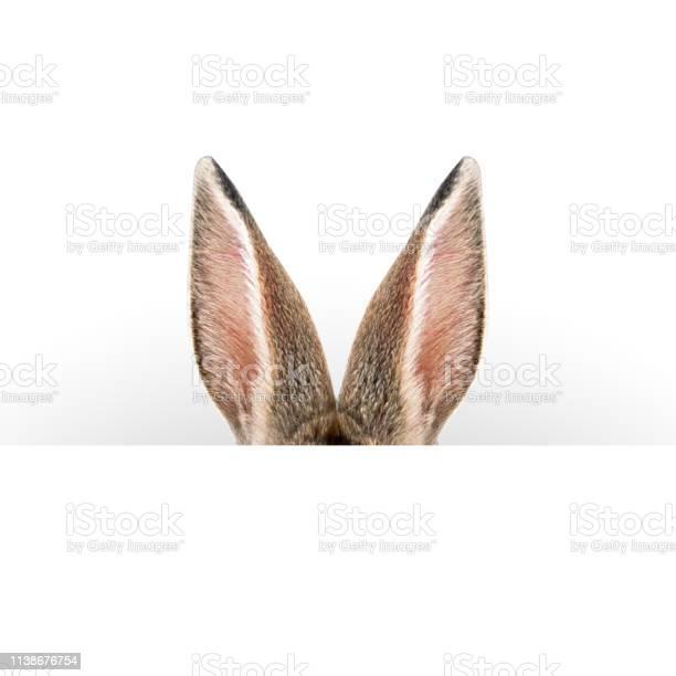 Hare ears easter card picture id1138676754?b=1&k=6&m=1138676754&s=612x612&h=mqkytqspuuemr4mqjwu7jy2gvttmntzzk c  q8jbfo=