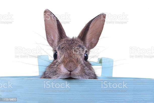 Hare in a basket picture id172379920?b=1&k=6&m=172379920&s=612x612&h=4dkpn3tzxaq9wtdgkgrfpdymucqk2ussqk4vyfscjas=