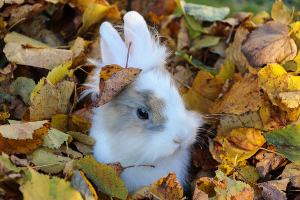 https://media.istockphoto.com/photos/hare-surrounded-by-leaves-in-autumn-picture-id989358700?k=20&m=989358700&s=612x612&w=0&h=xgC3_GGlU1VirkqB3Q_R99sPrSY2f5YwG0KHASZ-324=