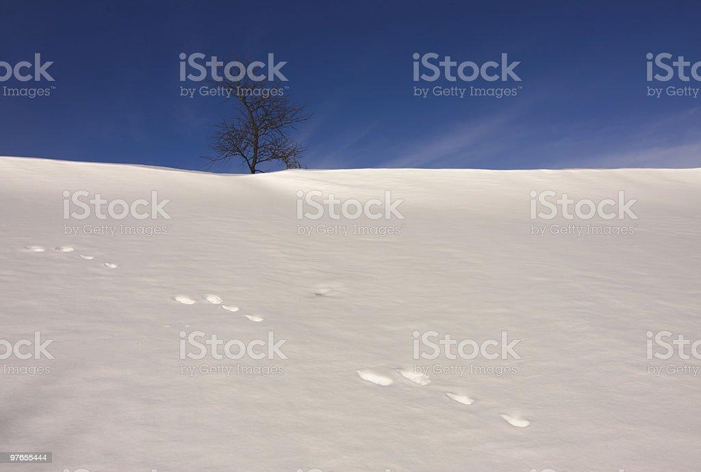 Hare tracks on snow stock photo