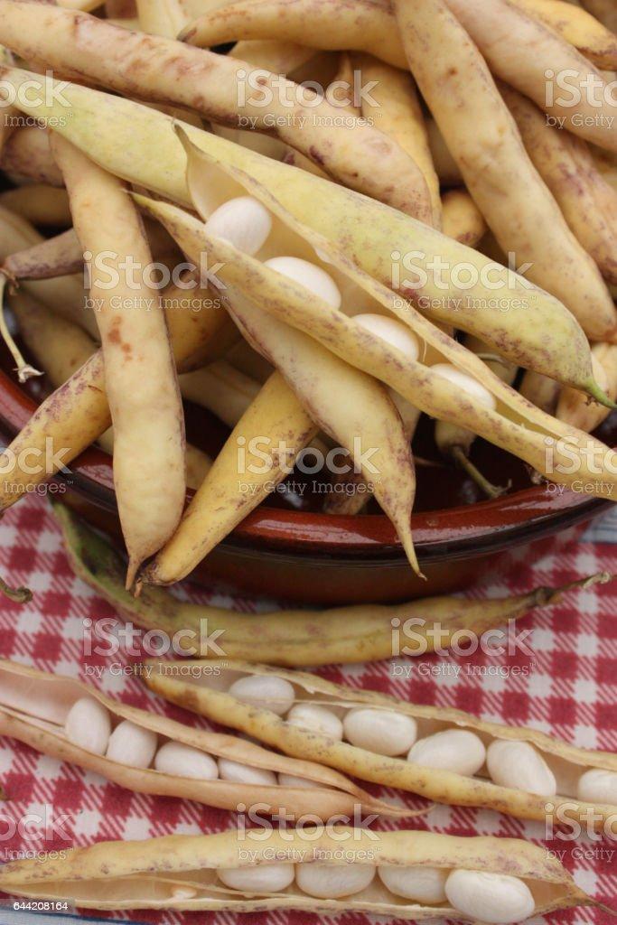Haricot blanc - écosser stock photo