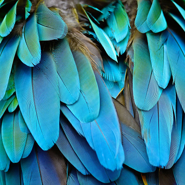 harlequin macaw feathers - green winged macaw stock photos and pictures