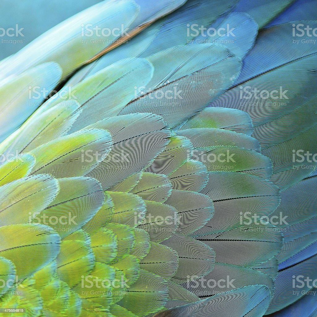 Arlecchino Ara piume - foto stock