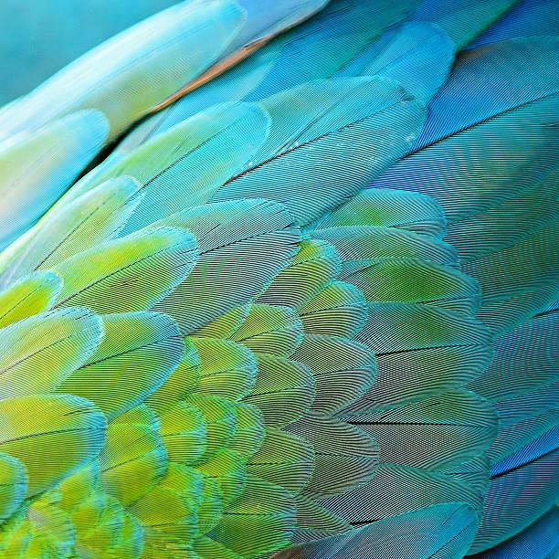 arlecchino ara piume - piume colorate foto e immagini stock