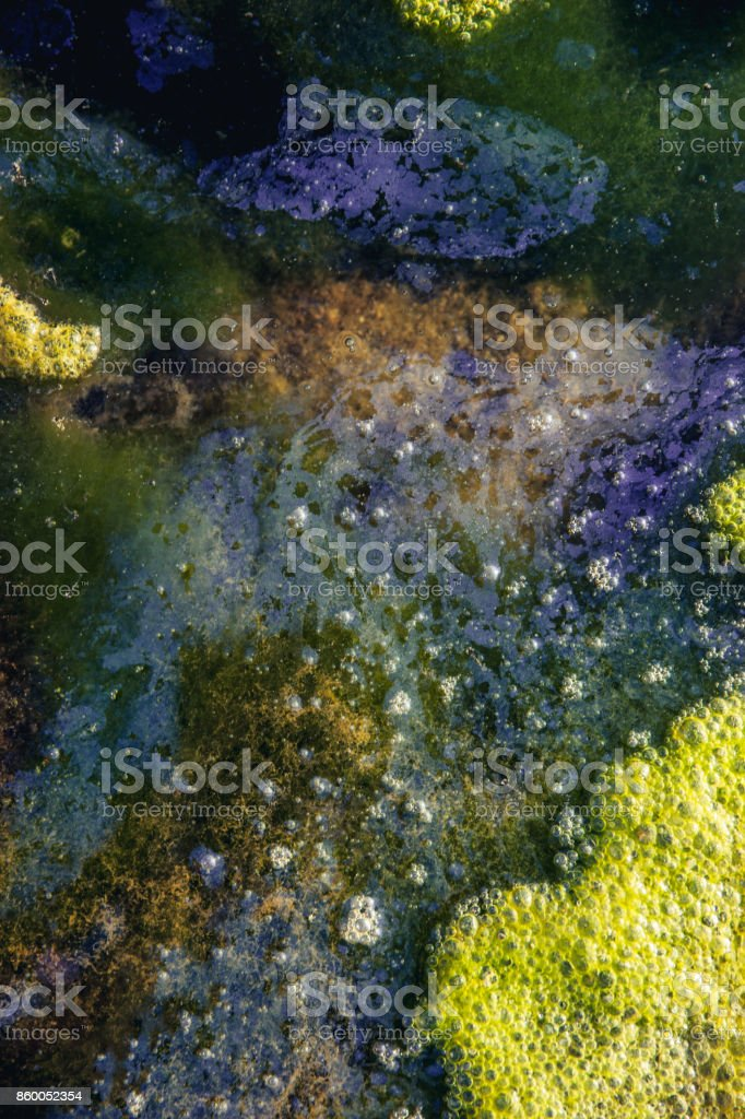 Harmful Algal Blooms in Pollutted Water stock photo