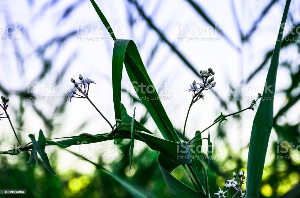 Harmful flowers stock photo