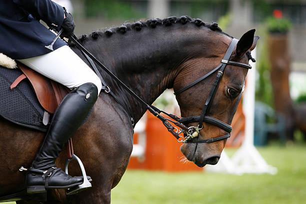 harmony between horse and rider - hästhoppning bildbanksfoton och bilder
