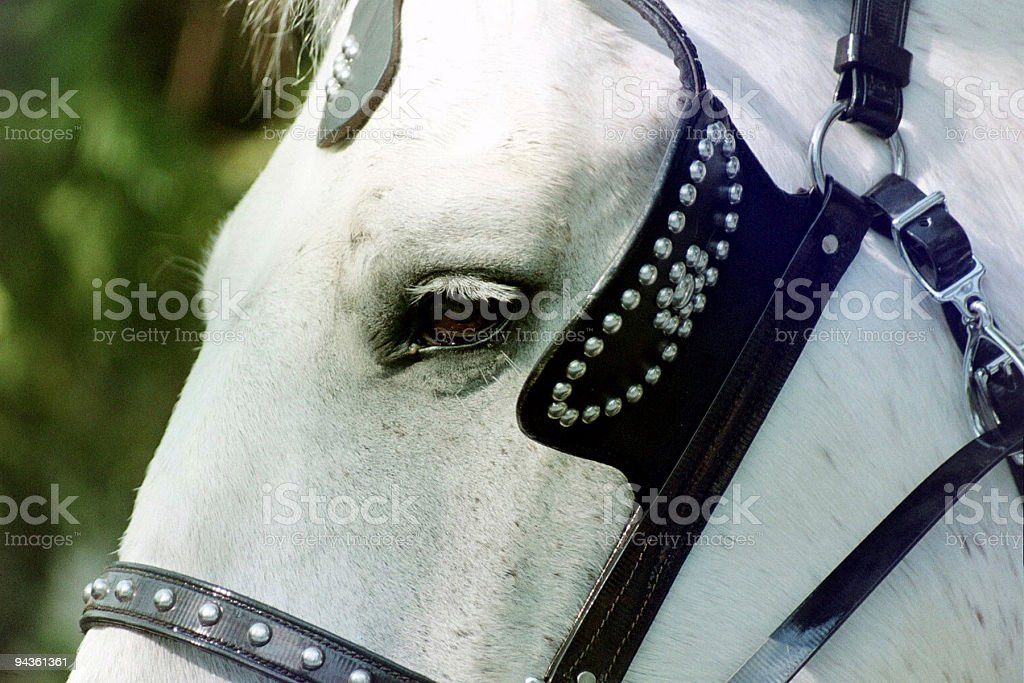 Harness Horse royalty-free stock photo